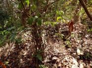 """La llamada """"Trinchera"""" es a primera vista, un promontorio que se eleva por encima de un terreno que desciende muy accidentadamente, señalando que nos encontramos en una de las laderas del cerro del Chiquihuite. Aparte del campamento francés cerca del nacimiento de este río, el coronel Pierre Joseph Jeanningros (1816-1902), comandante en jefe de los 2 batallones del Regimiento Extranjero estacionado en México, estableció en 1863 un mirador o puesto de observación en lo alto del Chiquihuite, dotado de catalejo, para controlar visualmente el camino nacional y sus puentes desde Paso del Macho."""